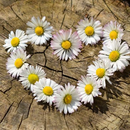 hart bloemen